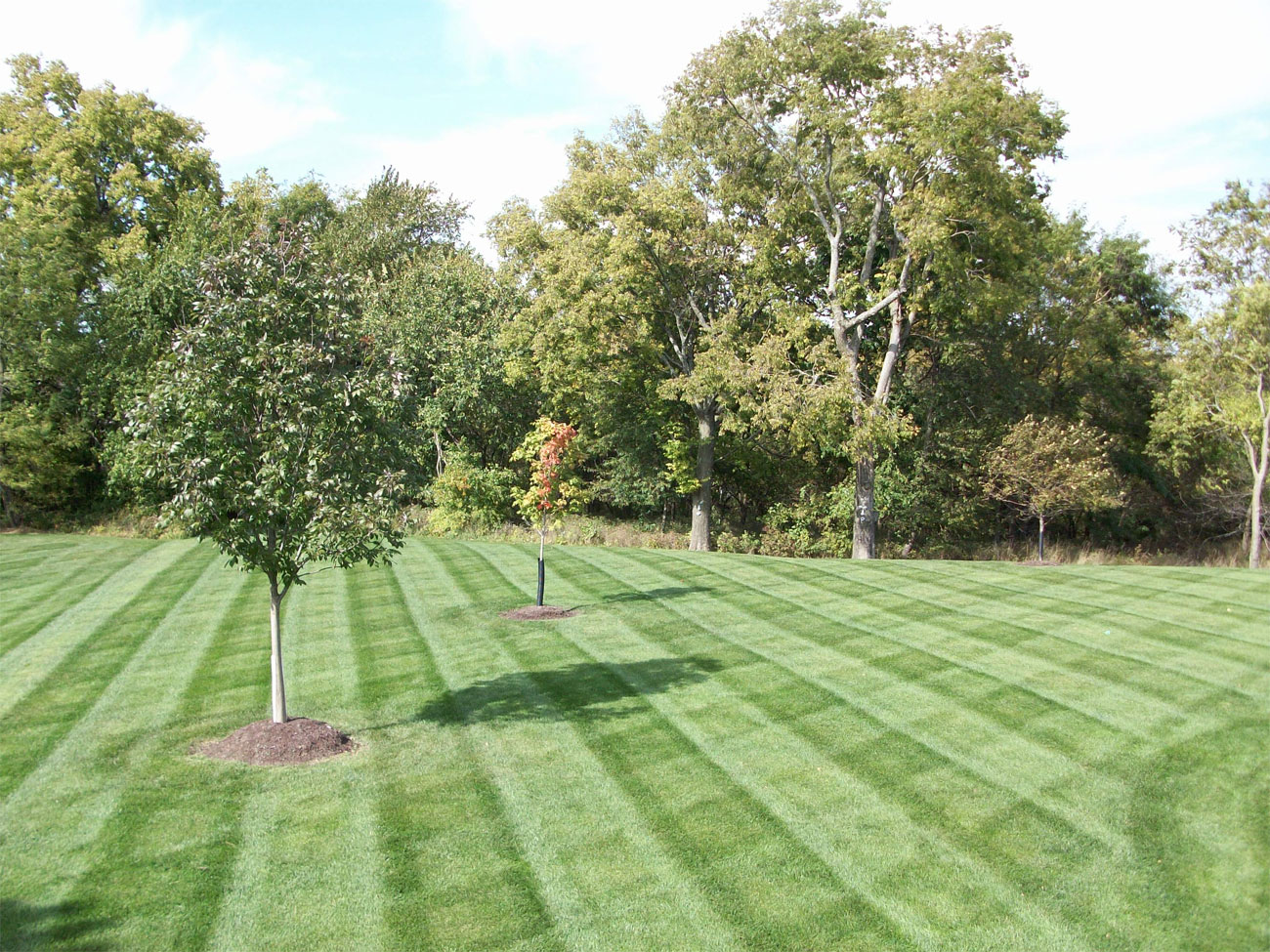 Roe Lawn Care C N Green